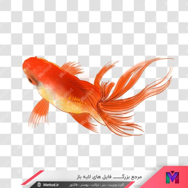 عکس ماهی قرمز png
