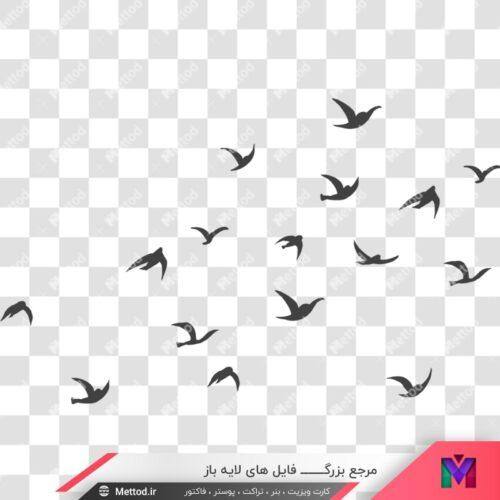 وکتور پرندگان طرح 55